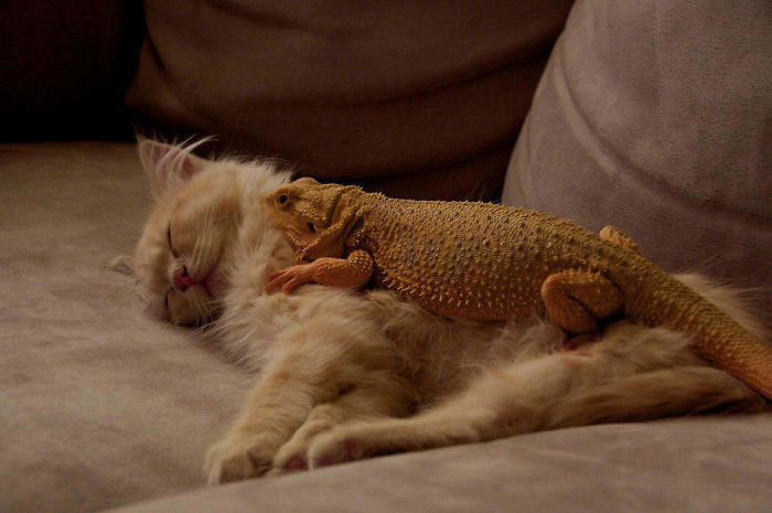 There's Something About Lizards And Cats Together That Makes Me Turn Into A Little Girl