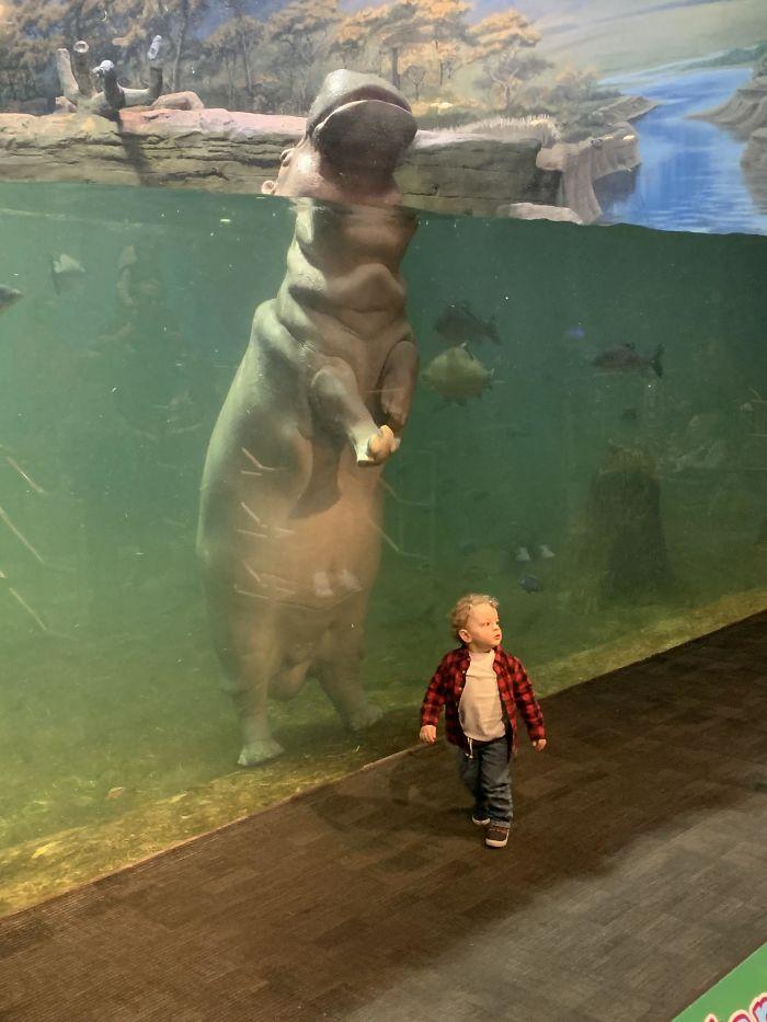 Hipopótamo vs niño