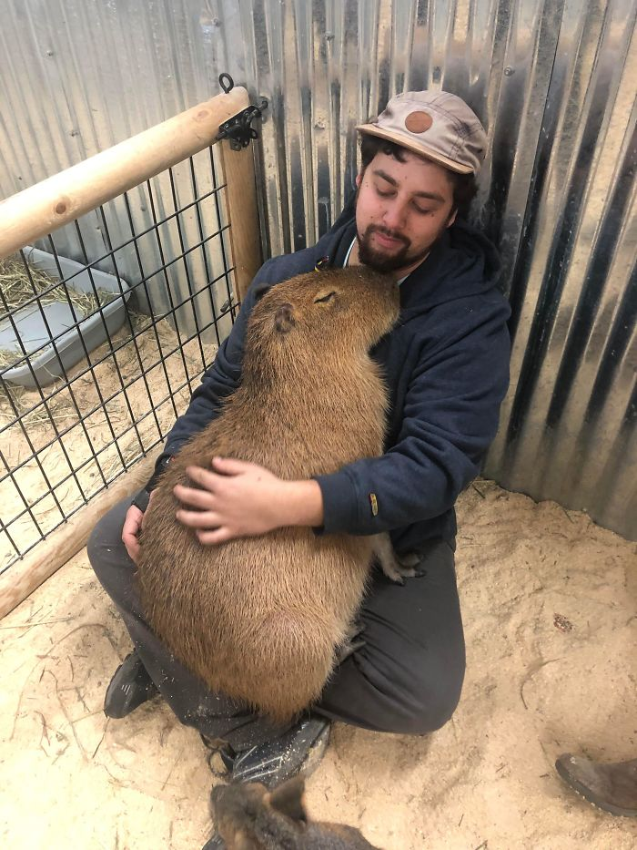 Here's My Favorite Picture Of Me With A Snuggly Capybara