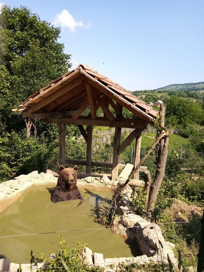 I'm Volunteering In A Bear Refuge In Croatia And I Thought Like Sharing This Photo Of A Chillaxing Lad With You Guys
