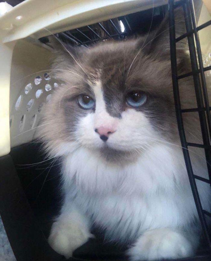 Con 30 años al fin pude adoptar un gato, tiene 4 años y se llama Draco