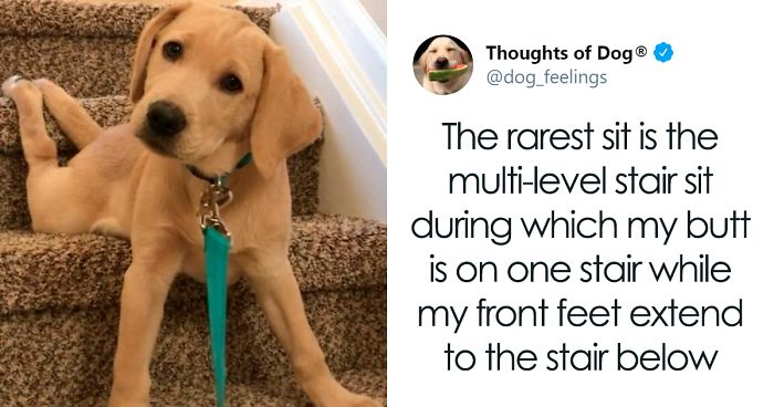 """People Are Sharing Funny Pics Of Their Dogs Doing """"The Rarest Sit"""" (30 Tweets)"""