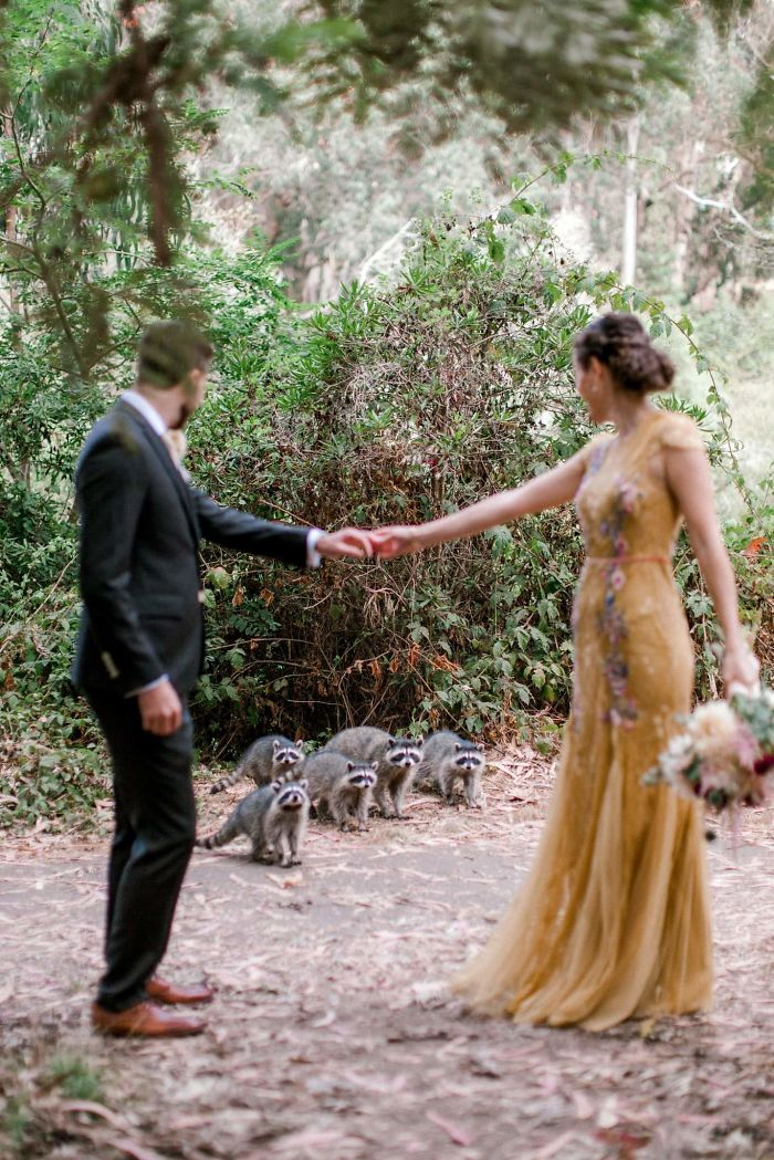 They Got Photobombed By Raccoons On Their Wedding Photo Shoot