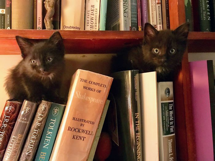 My Two Boys... Just Hanging Out In The Safety Of The Bookshelf