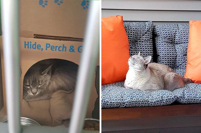 Hace 3 años adopté al gato de aspecto más triste del refugio