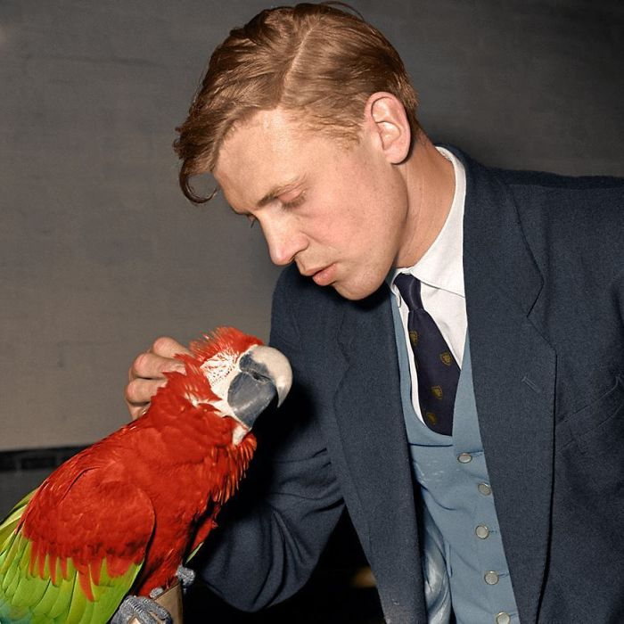 Sir David Attenborough, Born This Day In 1926, Seen Here Petting A Macaw Around 1950-51