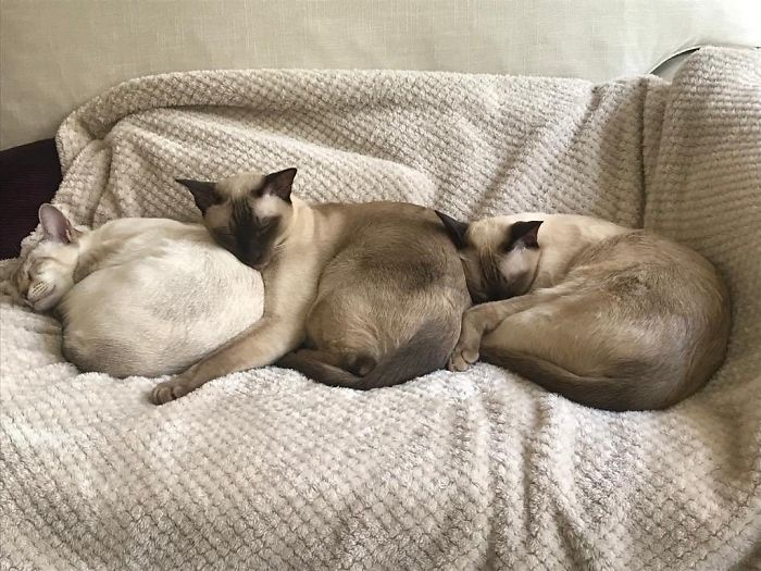 Weird-Position-Lying-Cats-Pics