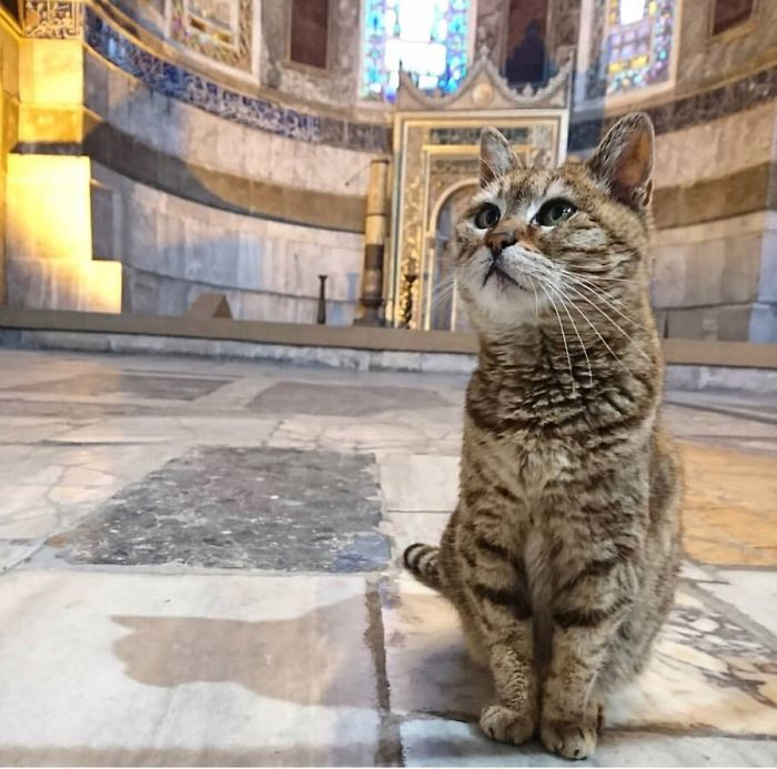 Hagia-Sophia-Cat