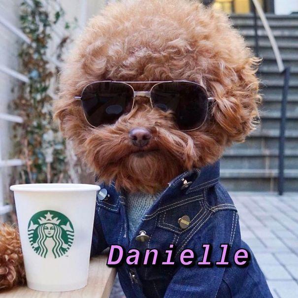 Instagram-Meme-Dog-Photos-Based-On-Names-Whatdogyouare