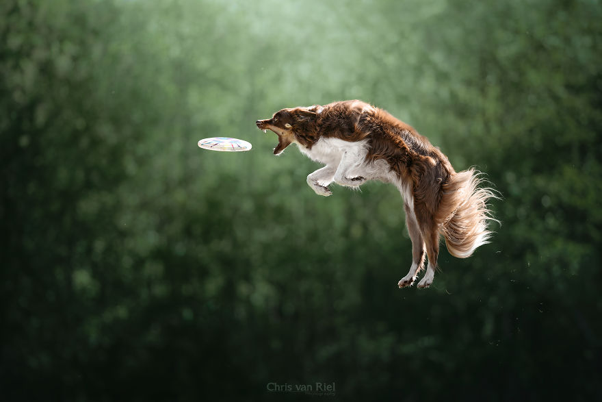 12 Pictures Of Dogs Trying To Catch Frisbee