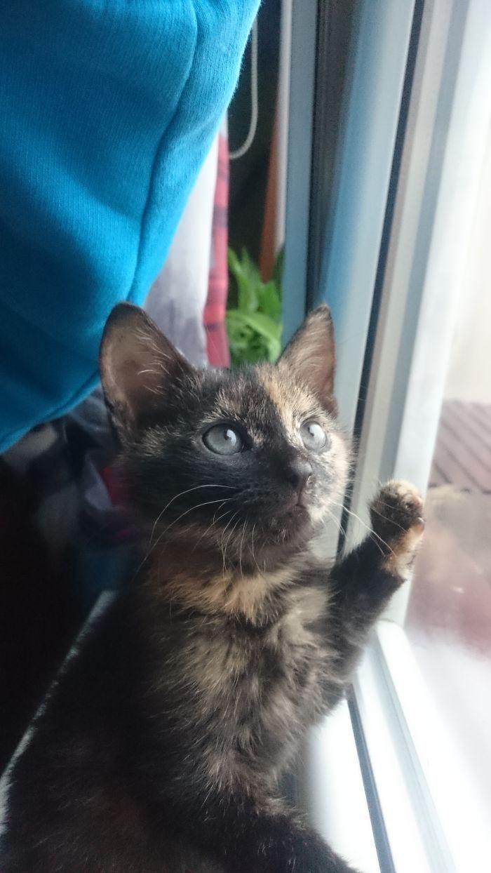 My First Cat