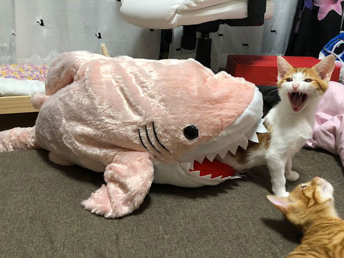 Shia Caught By A Shark
