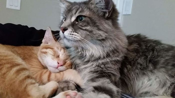 Pancake And Jack Meowington