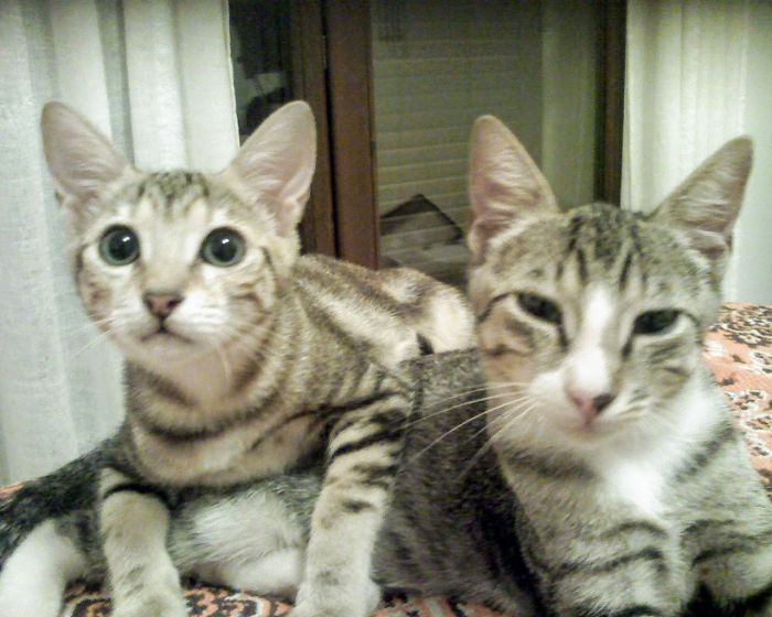 Cateta And Cateto, Sister And Brother, On Our Bed One Month After Being Rescued From A Shelter