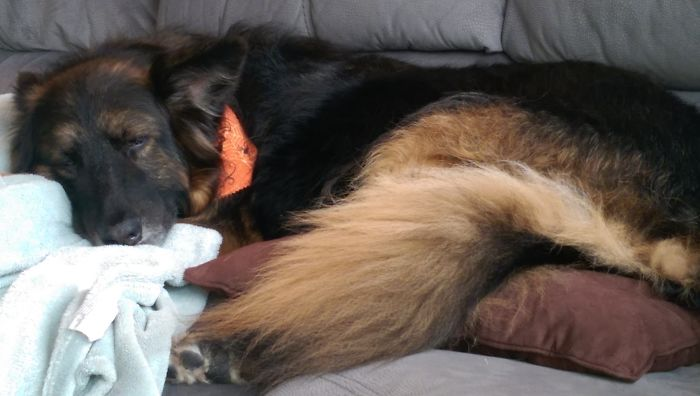 """Sleeping After A """"Ruff"""" Day At The Groomer"""