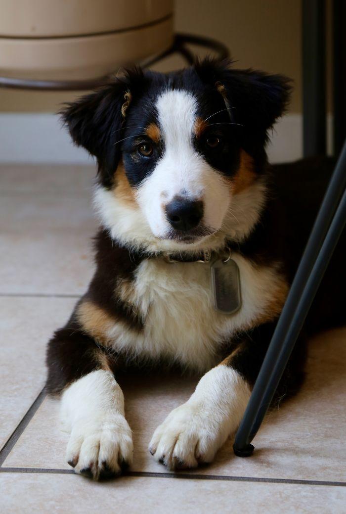 Mazy At 4 Months