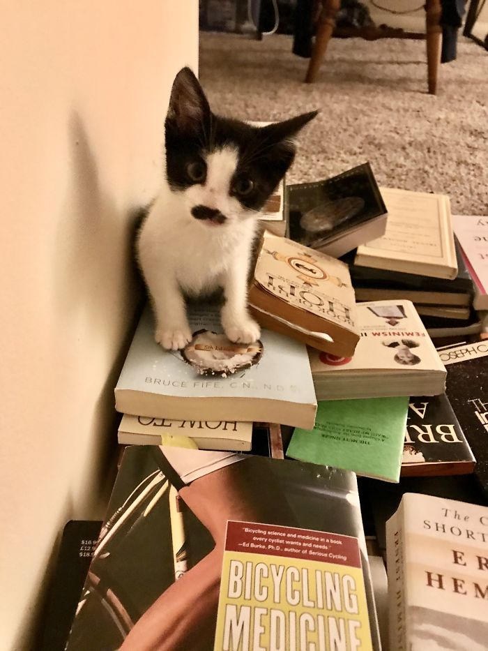 Henry On Top Of A Pile Of Books