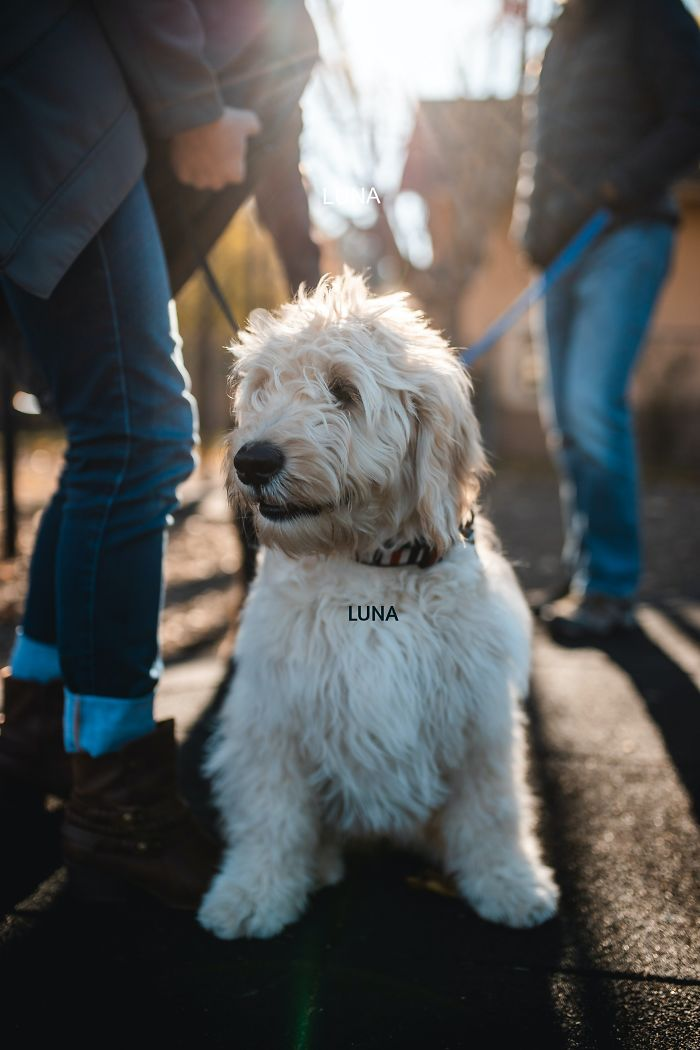 Luna On A Walk