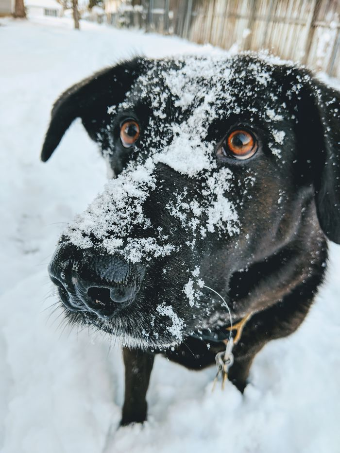 He Loooooves The Snow!