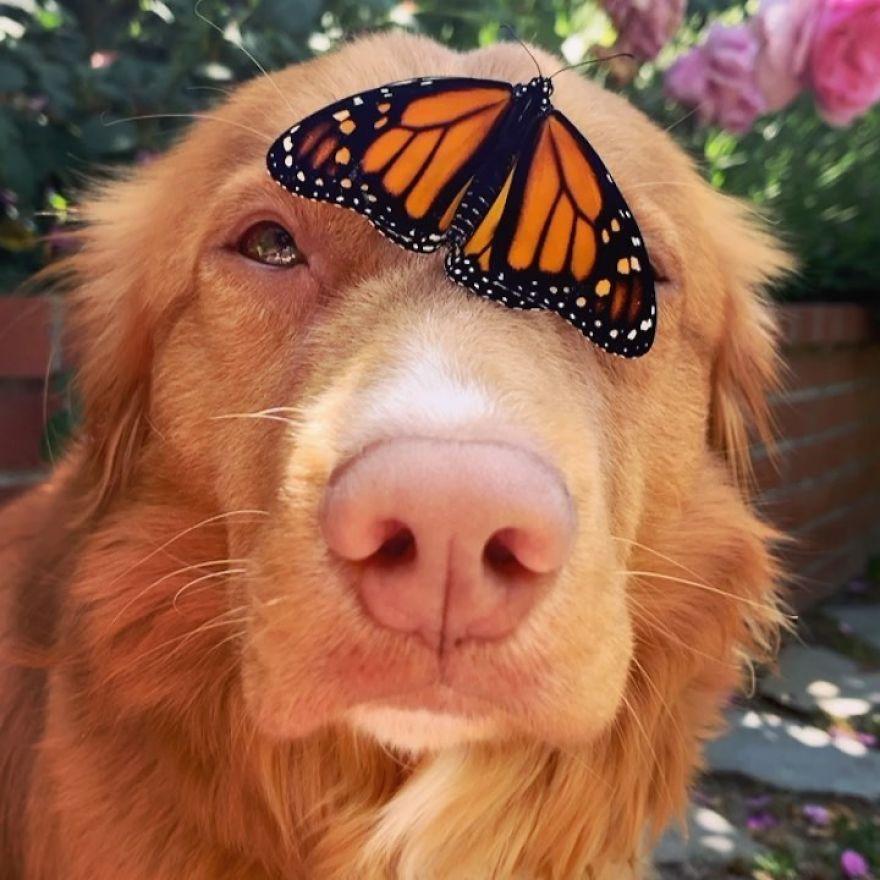 Gentle Doggo Befriends All The Butterflies That Live In His Garden (16 Pics)