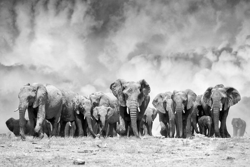Elephant Ridge