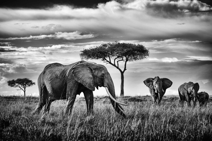 The Matriarch, Queen Of The Mara