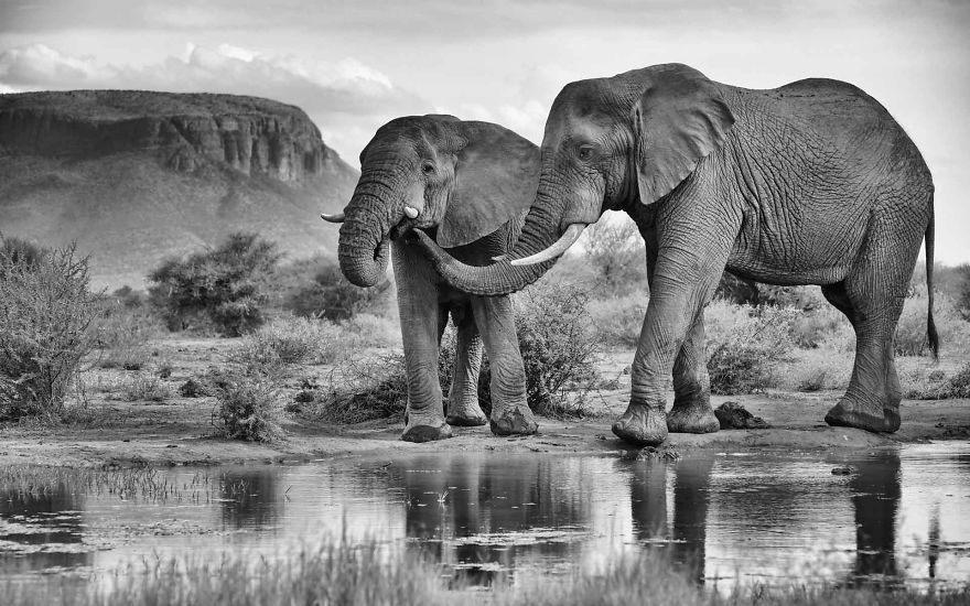 Elephant Brothers, Bonds Of Love