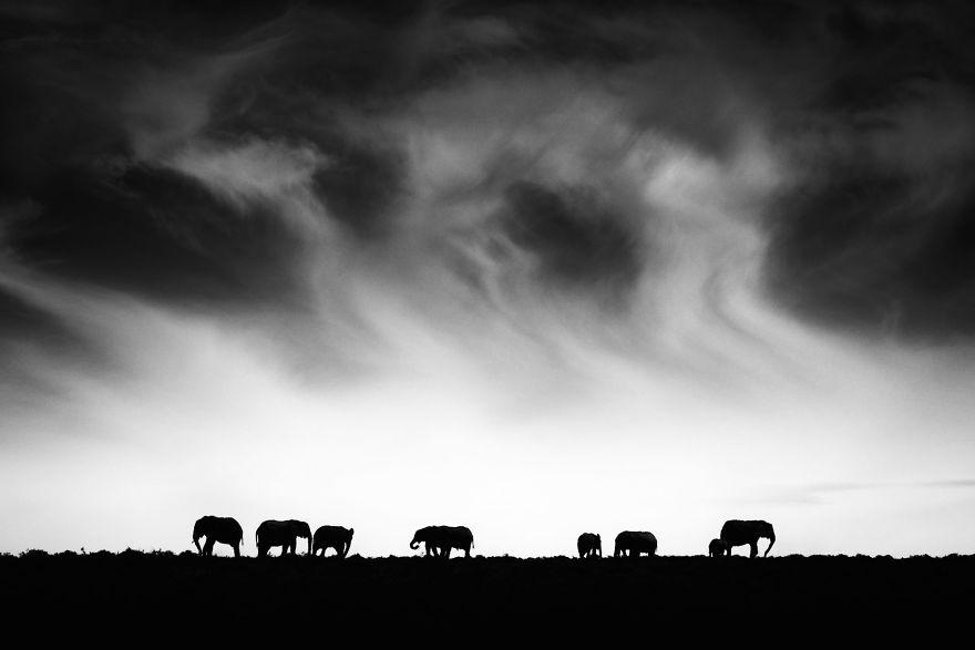 Addo Elephant Ridge