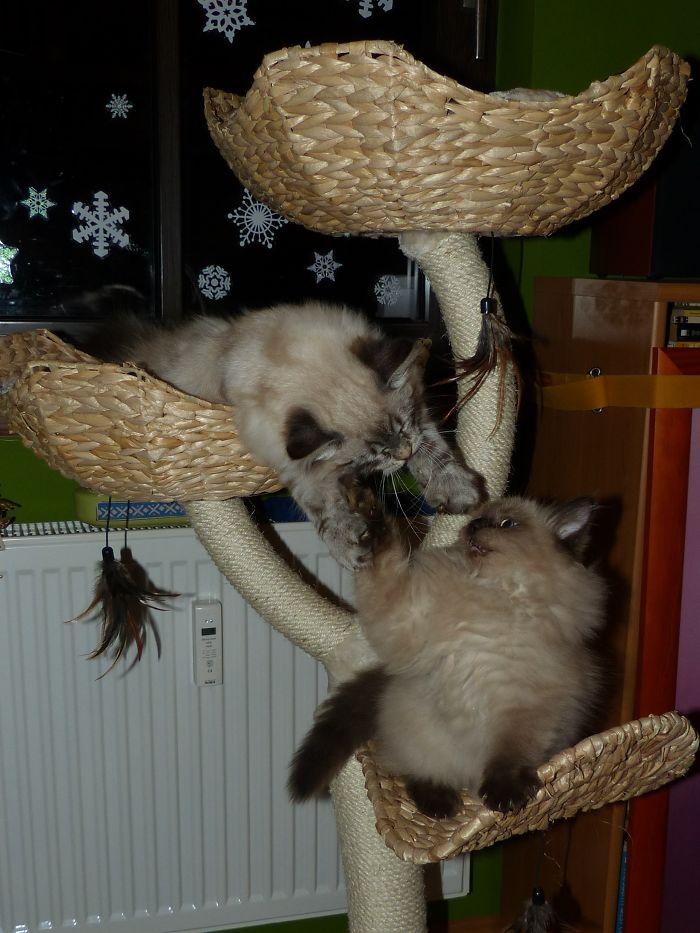 Nini And Toffee