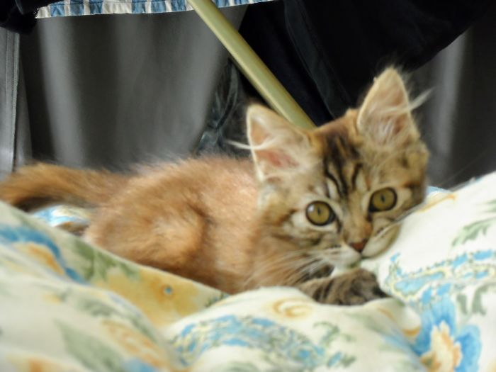 Pilla Is Playing With Us On The Bed One Month After We Rescued Her From The Street