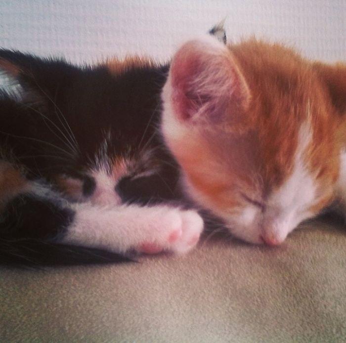 Tiny Sleepy Babies