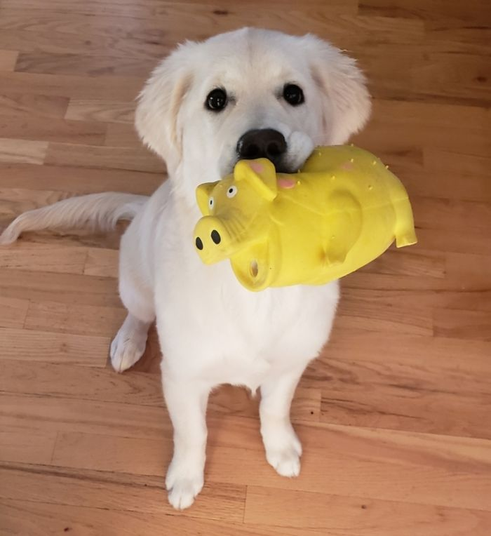She's Always Loved Squeaky Toys! She Has Since Amassed A Collection Of At Least 30 And She Loves Them All!
