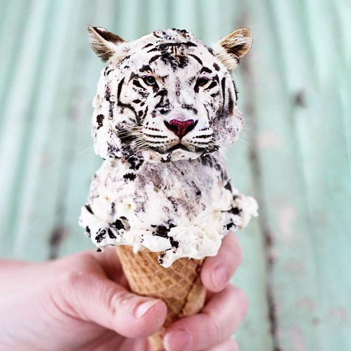 Someone Is Photoshopping Animals Everywhere And People Want More (86 New Pics)