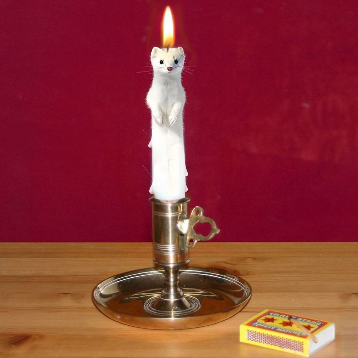 Dinner By Weasel-Light