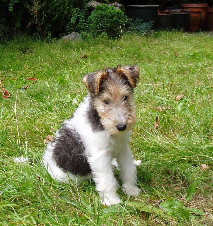 My Little Tilly Pup!
