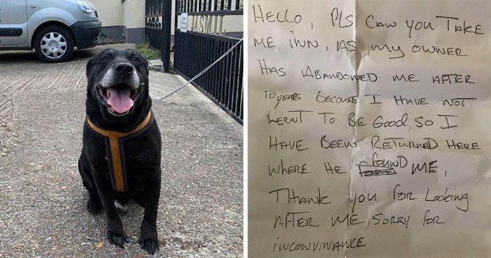 """I Haven't Learnt To Be Good"": People Find An Abandoned Elderly Labrador With A Note"