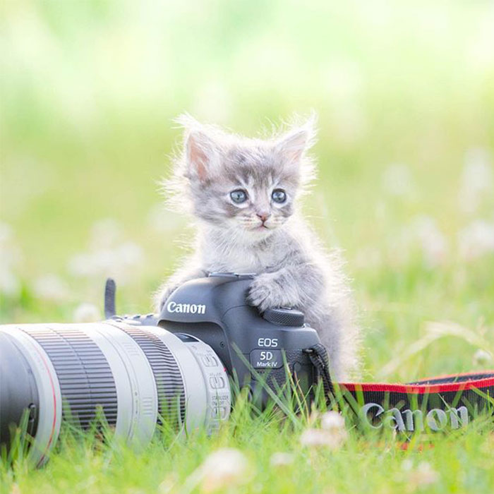 This Photographer Captures Bright And Happy Photos Of Adorable Kittens Playing With Cameras (18 Pics)