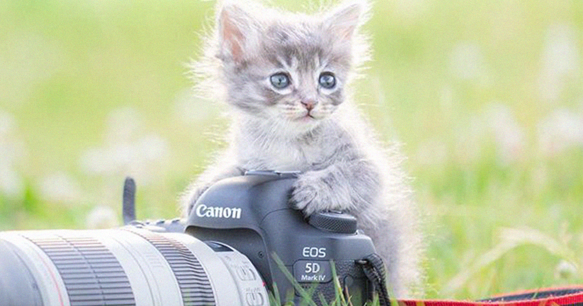 This Japanese Photographer Captures Kittens Playing With Cameras (18 Pics)
