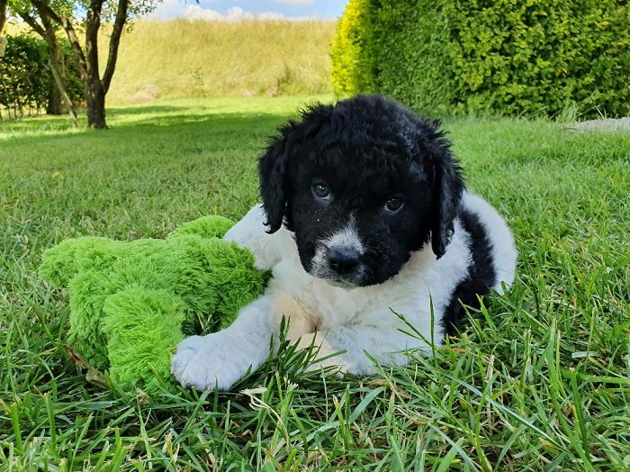 Fardou, 6 Weeks Old In This Picture