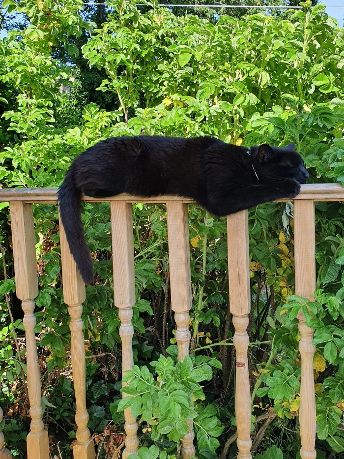 Nirmal Doing His Best Panther Impression In The Jungle Of The Back Garden.
