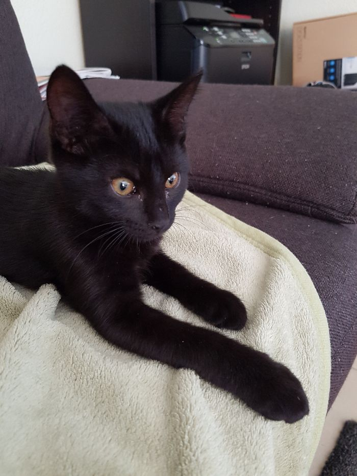Anny, About 10 Weeks Old At Her First Day With Us