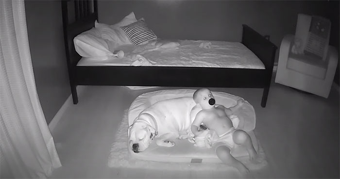 Camera Captures Adorable Moment Little Boy Sneaks Out Of His Bed To Sleep With His Dog