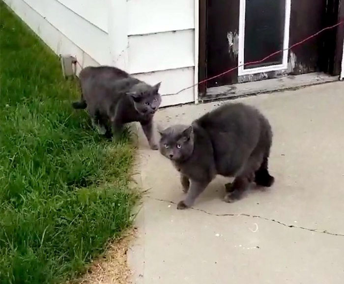 Woman Left Her Cat In Her Yard, Ran Outside After Hearing Screams To Find There Were Two Of Them And She Couldn't Tell Who Was Who