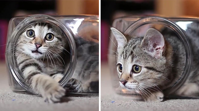 Video Of Kitten Having The Time Of His Life Inside Of A Fishbowl Goes Viral