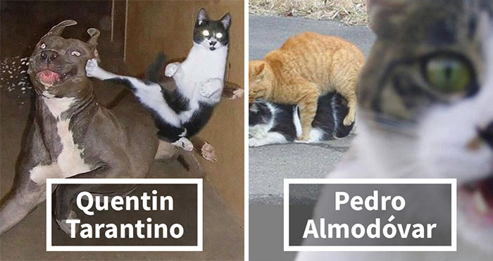 21 Hilarious Cat Versions Of Famous Movie Makers