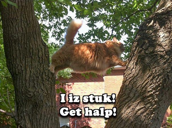 cat_climb_fail_i_iz_stuk_get_halp-5f07c041c732c.jpg