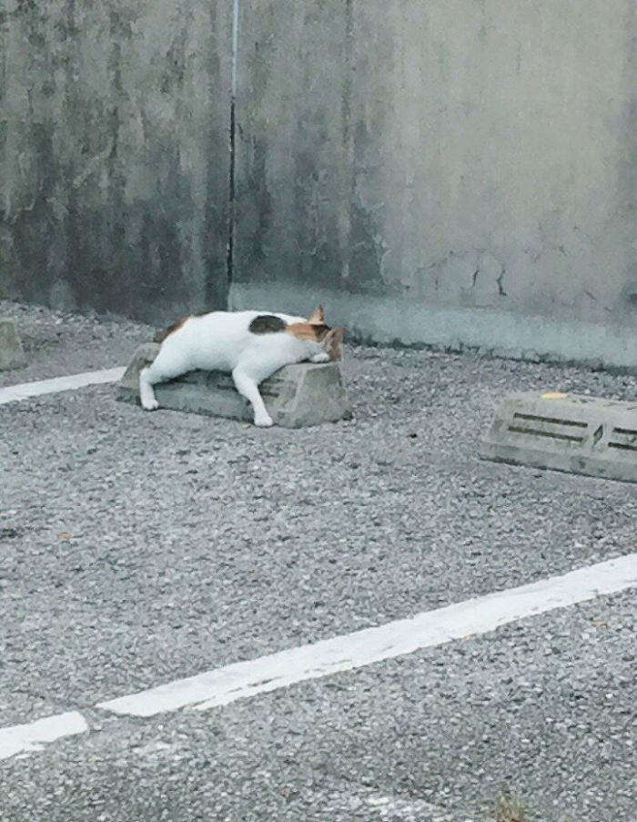 Cats-Sleeping-Parking-Lot-Curves