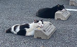 Se dan cuenta de que los gatos usan los topes de las plazas de aparcamiento como almohadas, y les hacen 10 encantadoras y divertidas fotos