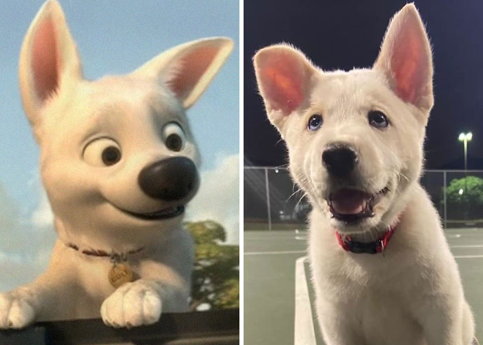 Celebrity-Lookalikes-Dog-Spotting-Society