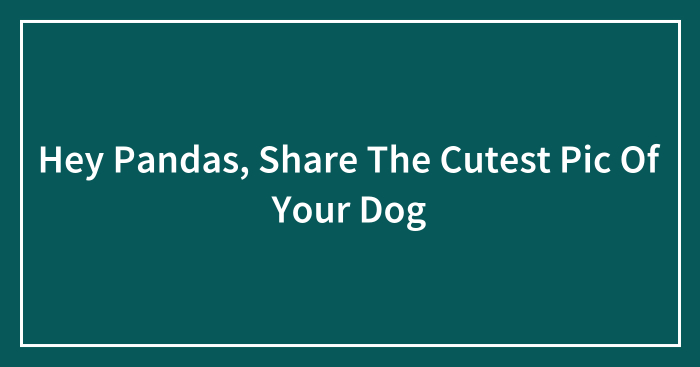 Hey Pandas, Share The Cutest Pic Of Your Dog